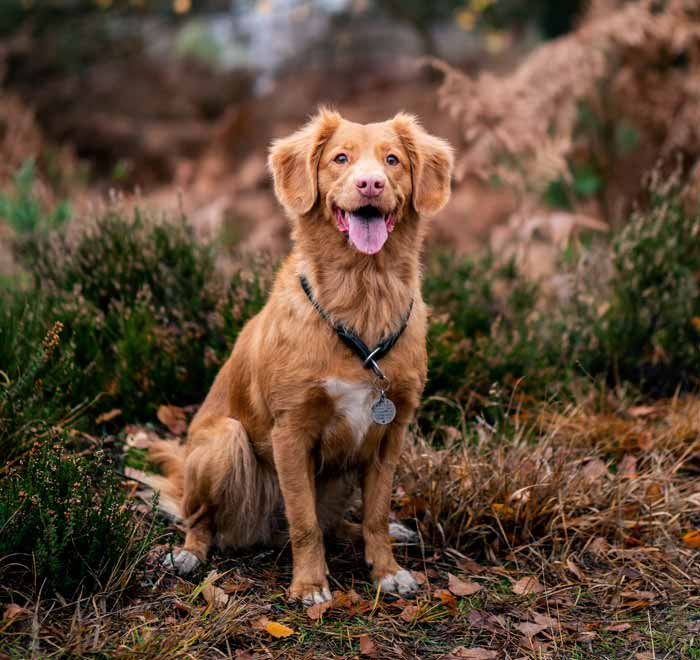 CBD Oil for Dogs: Can It Reduce Your Dog's Stress?
