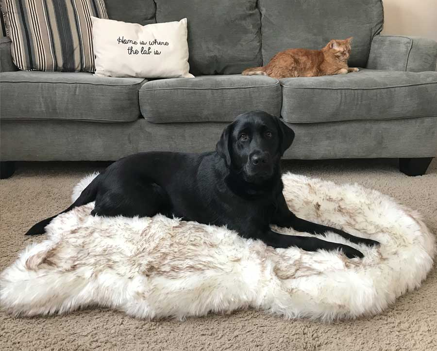 Luxury Pet Beds You Can Buy In 2019
